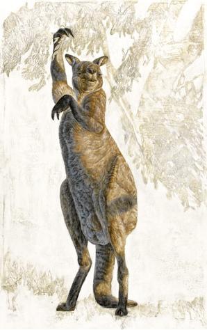 Move over Skippy: It's Procoptodon goliah